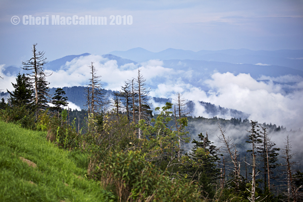 Clingmans_dome_faebook